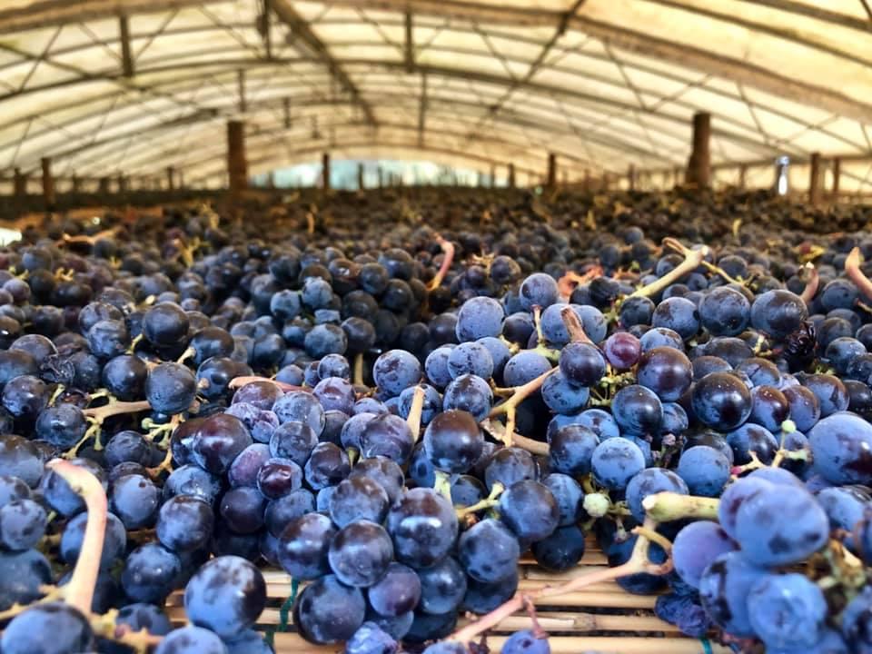 Essiccazione uva