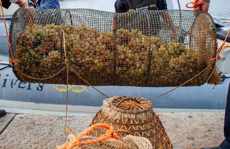 underwater wine